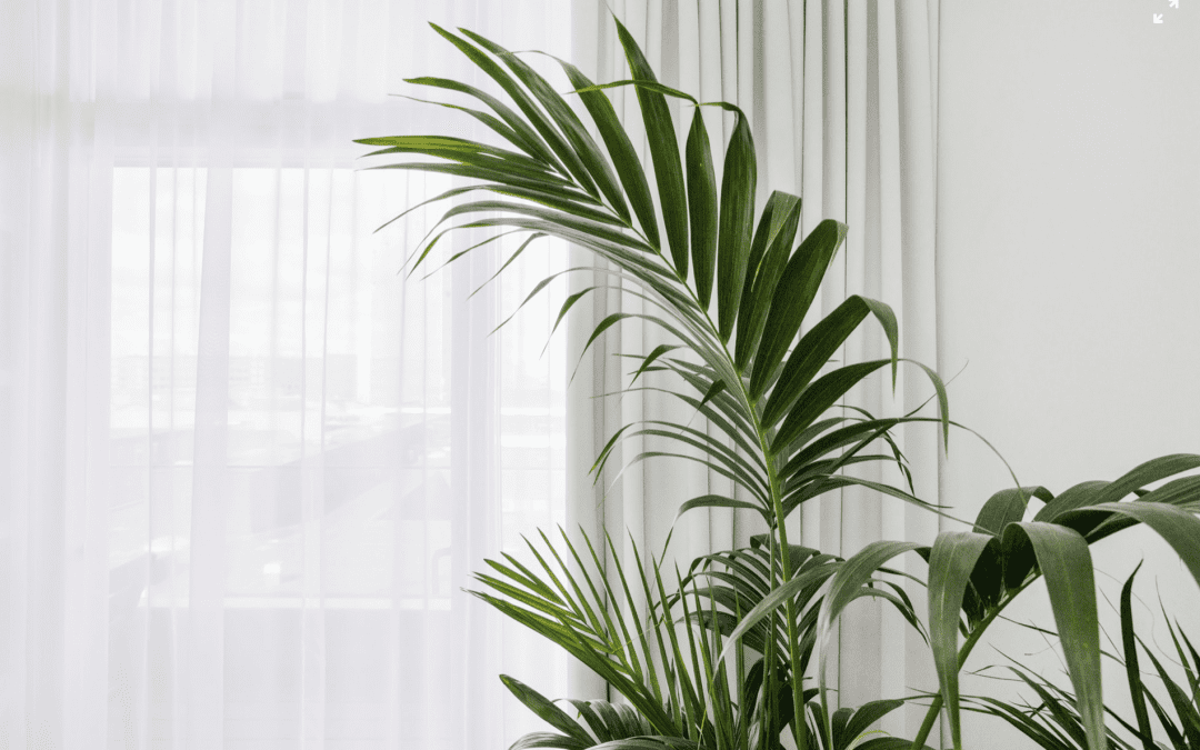 Green plant next to window with white curtains